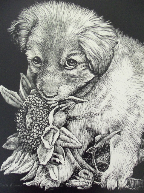 Copyright Lorelle Bacon Asheville area artist- Oops scratchboard art