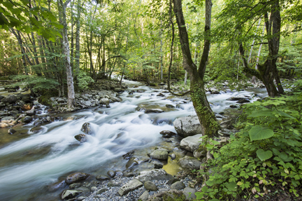 """Creek Confluence in Greenbrier section of Smokies"" photo by Tim Barnwell"